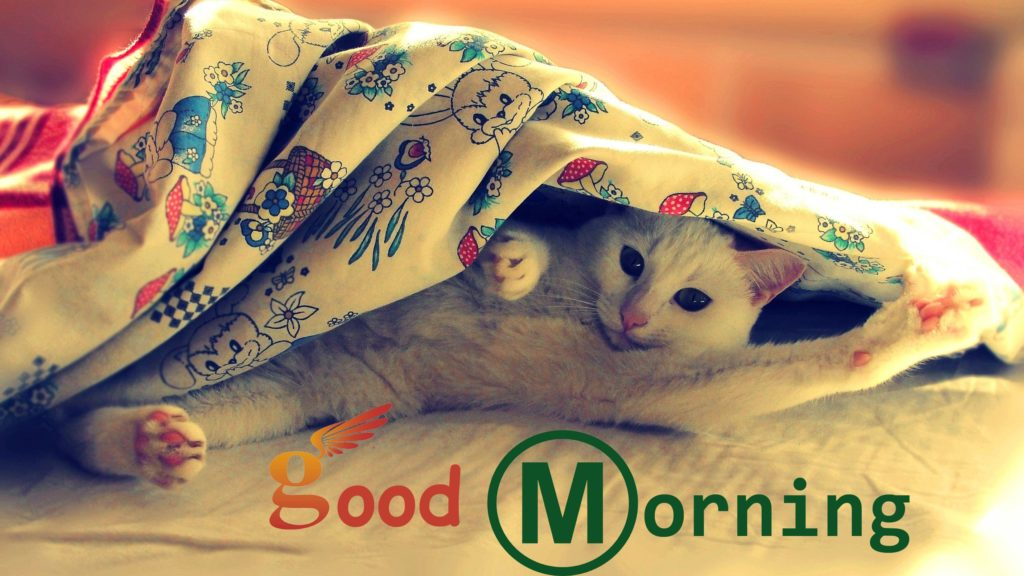 Free Good Morning Animals