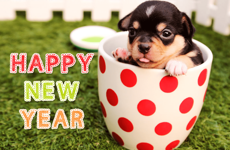 Cute Puppy Happy New Year