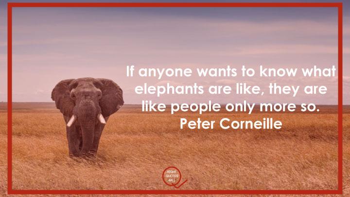 Elephant attitude quotes