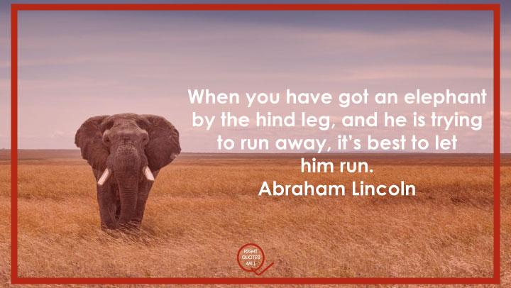 best elephant quotes